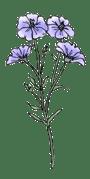 flax-cropped.original